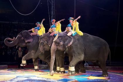 More Info for Carden Super Spectacular Circus